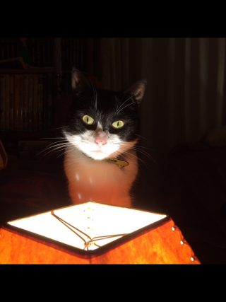 Photo of a black and white cat in a dark room, with just his face lit